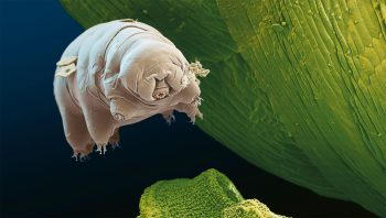 01CoverTardiDEF