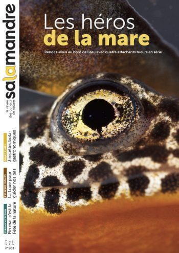 Couverture de La Salamandre n°203