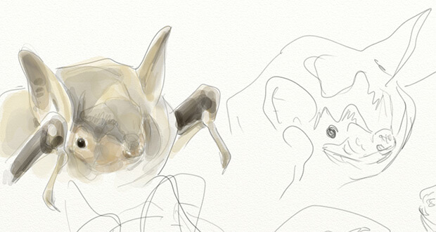 Le dessin de la semaine par Yann Le Bris