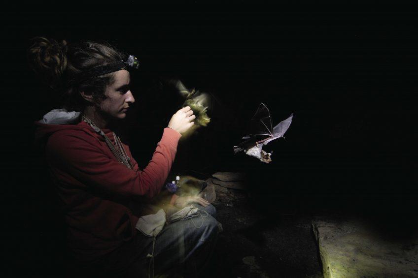 La conservation des chauves-souris en France