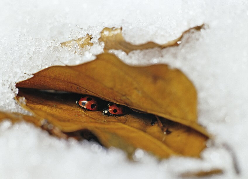 Pourquoi les insectes disparaissent-ils en hiver?