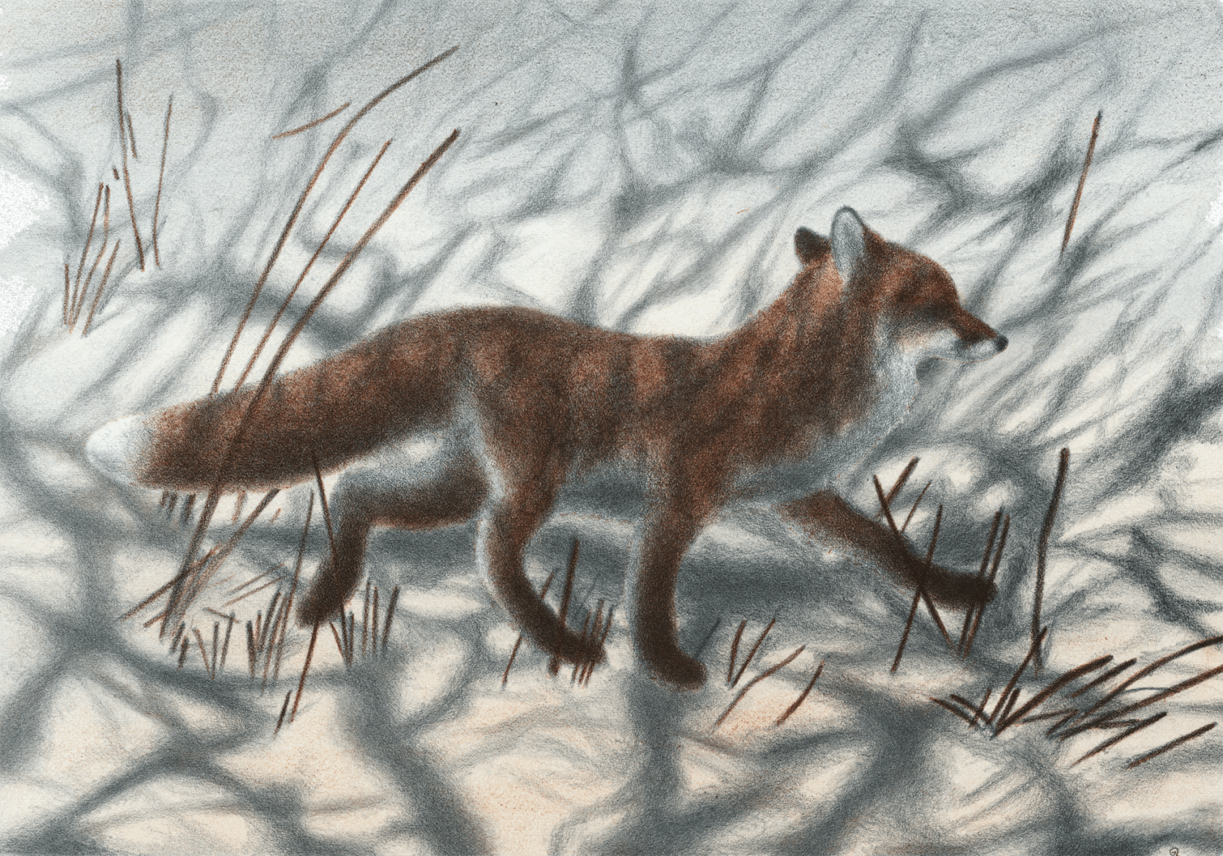 Le renard la nuit et jacques rime - Dessin renard ...