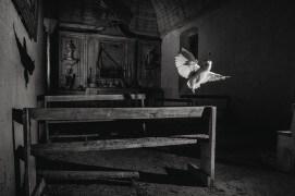 Effraie des clochers dans une chapelle / © Eric Médard