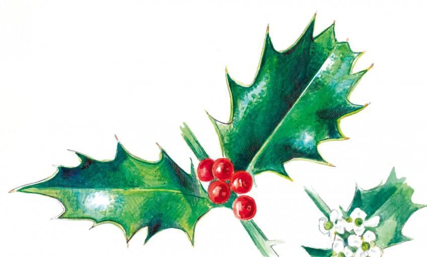 Houx De Noël La Salamandre