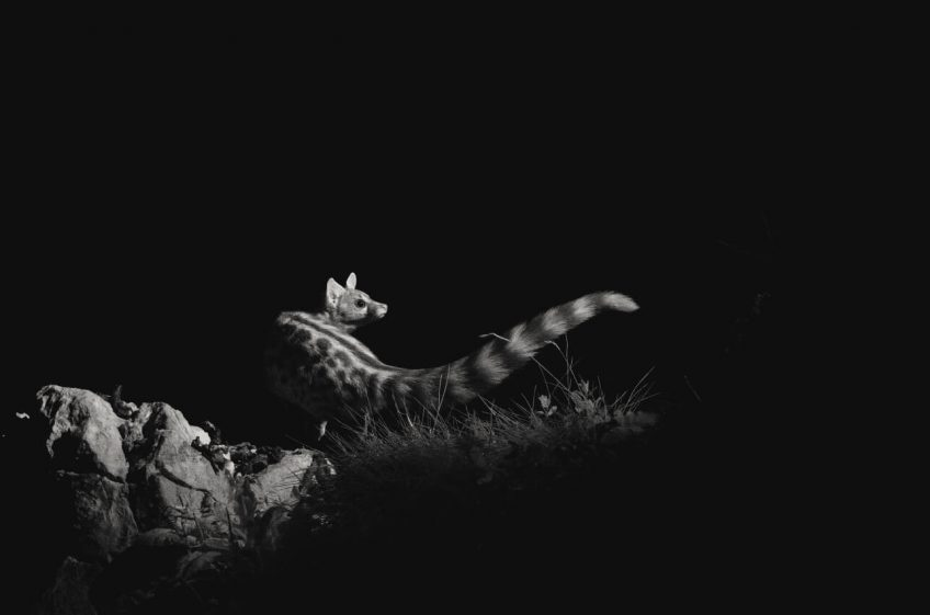 Les bêtes de la nuit