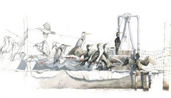 Grands cormorans sur un bateau de pêche