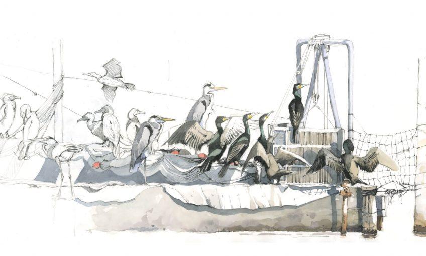 Confessions d'un pêcheur surdoué, le cormoran