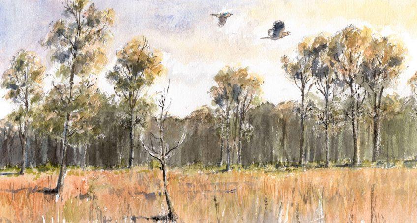 Geais des chênes en forêt