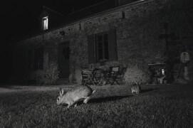 Lapin / © Eric Médard