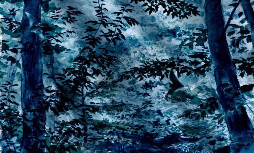 Des chauves-souris en forêt