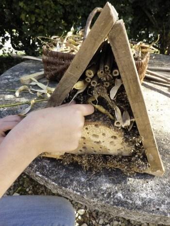 Construisez un abri à insectes pour l'hiver