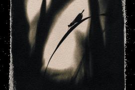 Calopteryx élégant / © David Tatin