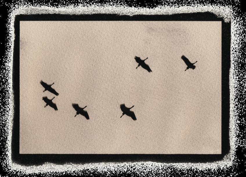 Le cyanotype ou l'infusion animale