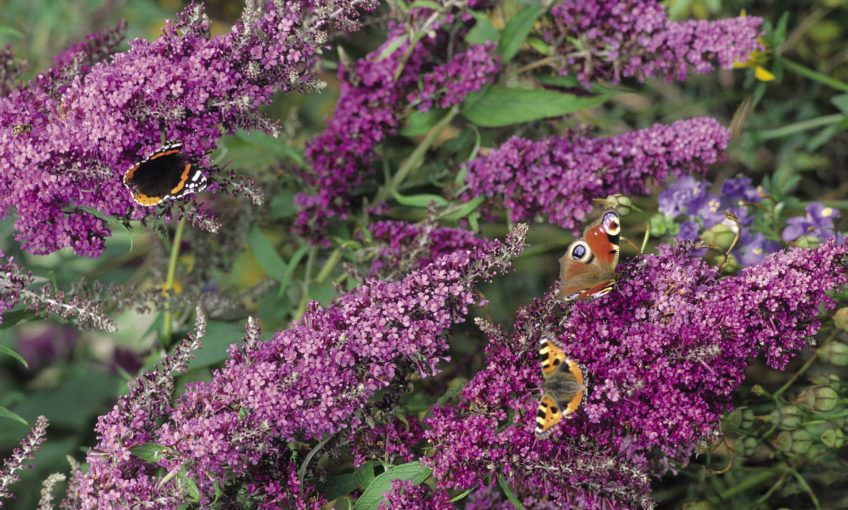 Pourquoi les plantes envahissantes sont-elles chaque printemps plus nombreuses?