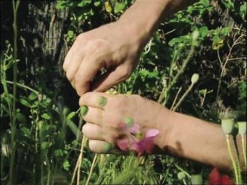 A la chasse aux graines