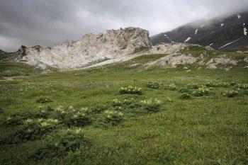 Réputée pour ses richesses botaniques, la Greina offre aussi un paysage géomorphologique étonnant.