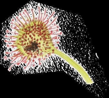 Les plantes carnivores en dix chiffres