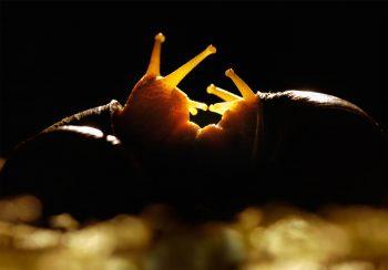 Rencontre amoureuse de deux escargots