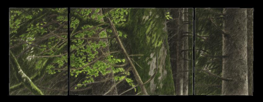 Le hêtre du peintre Jacques Rime