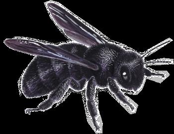 Des maisons pour les abeilles