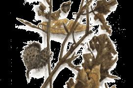 Avril - quelques feuilles brunes et fatiguées de la saison passée s'accrochent toujours aux rameaux. Mais au bout de ceux-ci, les bourgeons annoncent l'arrivée imminente de feuilles fraîches. / © Jacques Rime