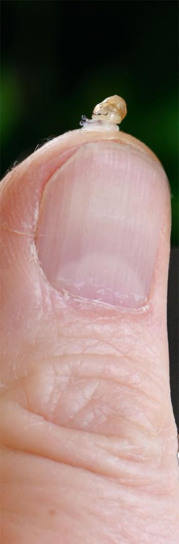 Carnage programmé sur les bébés escargots