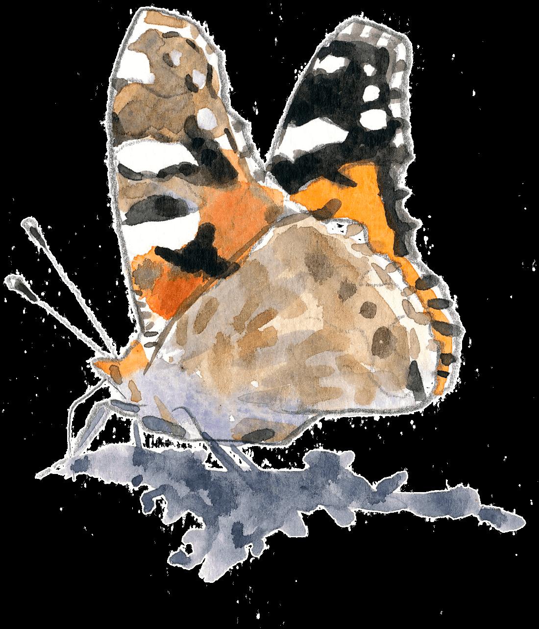 Les papillons sont de retour dans le jardin