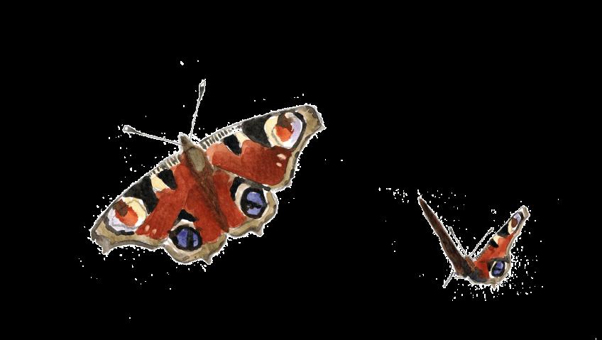 Un papillon caché dans le grenier