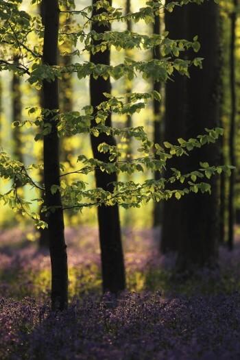 La vie du hêtre en cinq leçons
