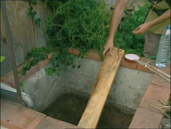 Faites de votre jardin un parardis pour hérisson