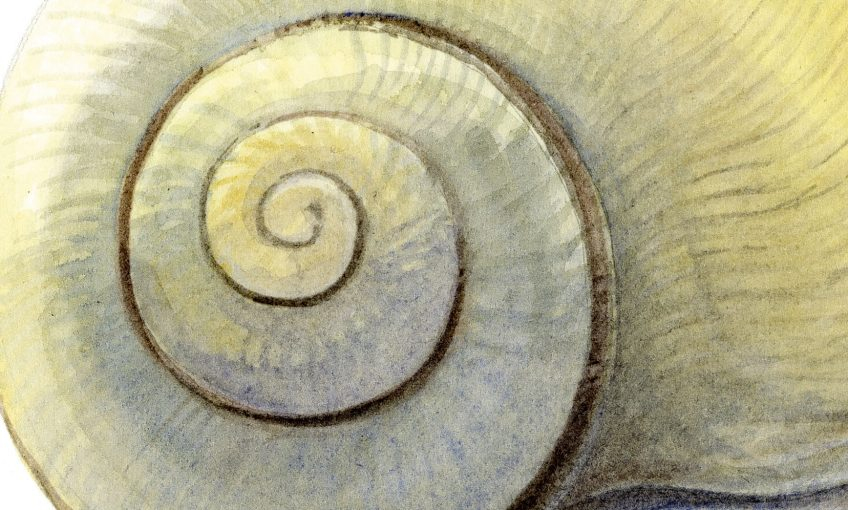 Secrets anatomiques de l'escargot épisode 1