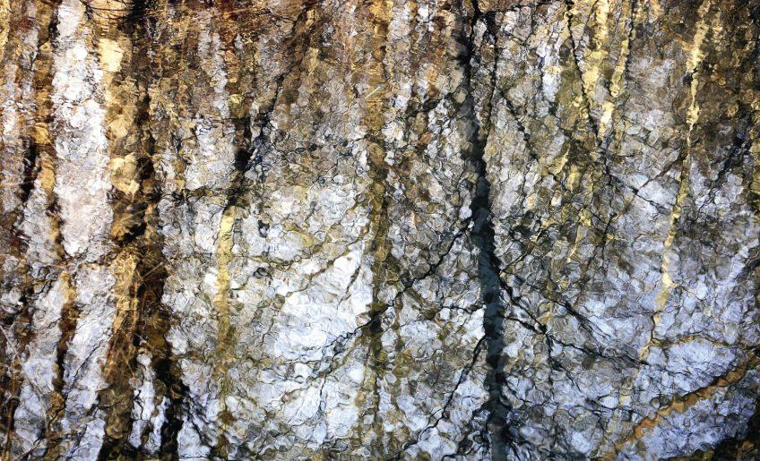 Reflets de forêt par Jean-Philippe Macchioni