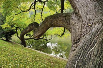 Moulez l'écorce des arbres pour apprendre à les reconnaître