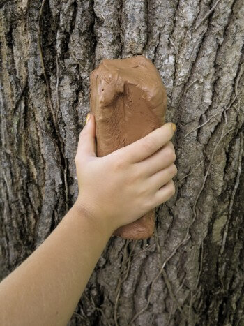 Réaliser un moulage d'écorce d'arbre