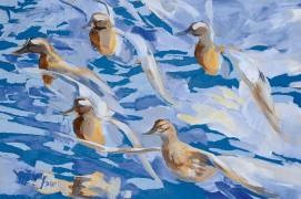 En mars, les sarcelles d'été sont de retour sur les lacs et les marais. Une effervescence nuptiale agite les groupes migrateurs. Entre deux vols de poursuite, ils lancent leur crécelle rauque qui rappelle celle du lagopède alpin. Le mouvement des ailes naturellement gris-bleu joue avec les reflets de l'eau. Les sourcils blancs des mâles sont autant de petits phares qui attirent l'œil de l'observateur. - Collage et acrylique sur panneau, réalisé en atelier à partir d'une aquarelle de terrain gelée. / © Nick Derry