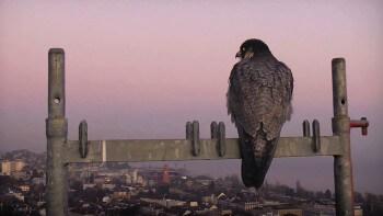Sentinelle, le film de Vincent Chabloz