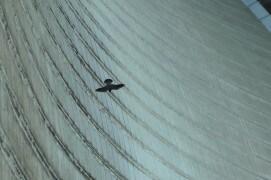 Extraits du film Sentinelle de Vincent Chabloz. / © Vincent Chabloz
