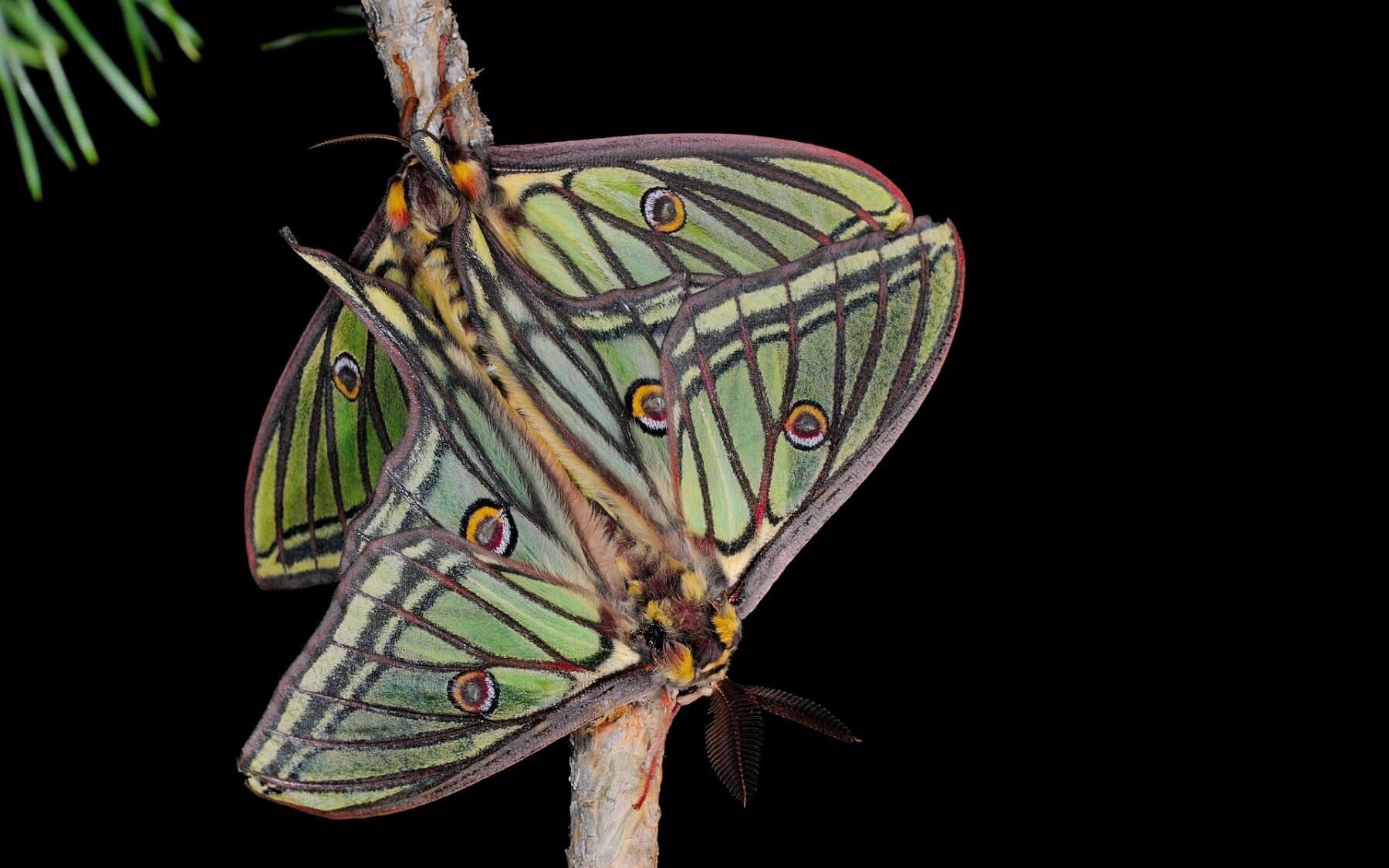 Lumi res sur les papillons de nuit - Invasion papillon de nuit ...