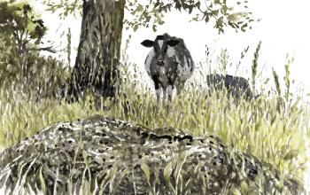 La bouse de vache, un véritable banquet à insectes