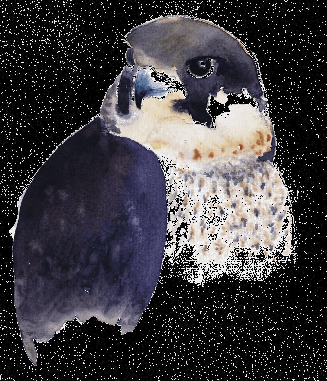 Le faucon des gargouilles