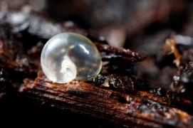 La sortie des bébés escargots: arrêts sur image / © Gilbert Hayoz