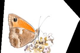 L'amaryllis pond sur diverses graminées. Ce papillon ne vole qu'en été et passe l'hiver sous forme de chenille. / © Sylvain Leparoux