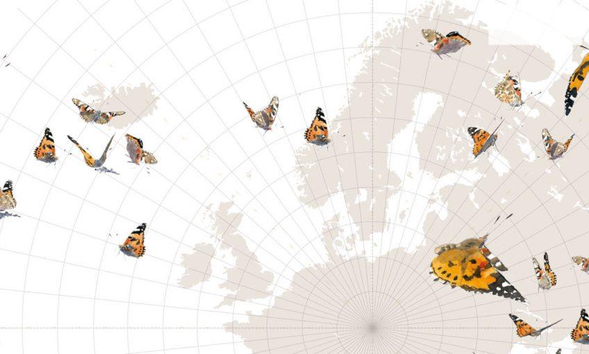 Le grand voyage des papillons belles-dames