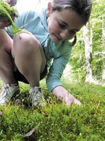 Le memory forestier, un jeu en plein air pour toute la famille