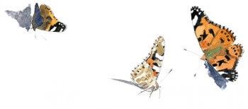 Osez la chasse aux papillons