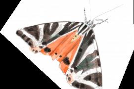 Les papillons sont de retour dans le jardin / © Sylvain Leparoux
