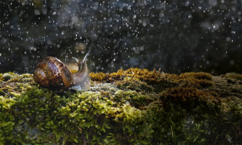L'escargot, un alien au jardin