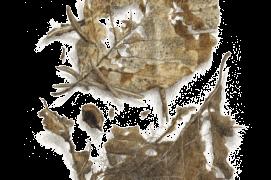 Mars - le squelette des feuilles est progressivement mis à nu pour former une fine dentelle  / © Jacques Rime