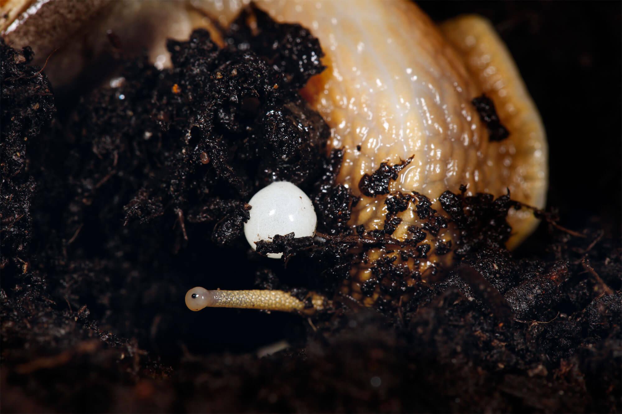 Les folles journées de l'escargot