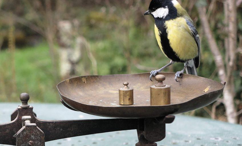 Pesez un mésange et les autres oiseaux qui viennent à la mangeoire